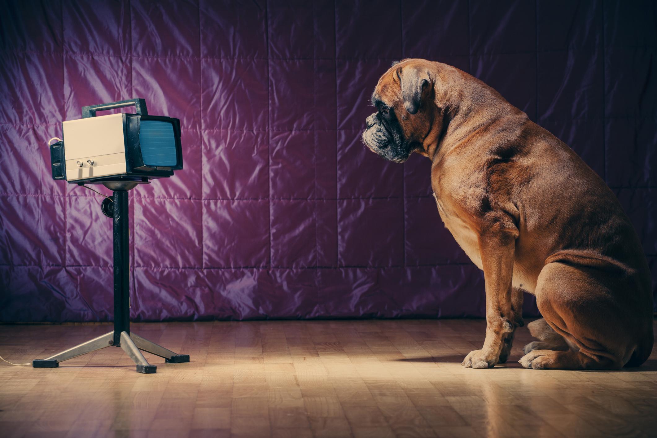 Kända filmer med hundar