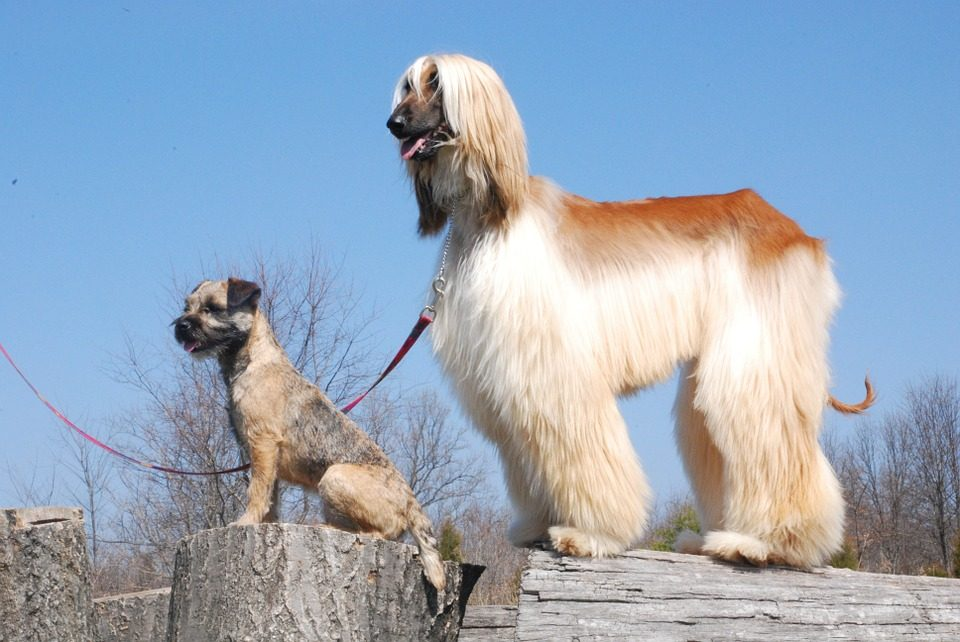 Pälsvård för hundar