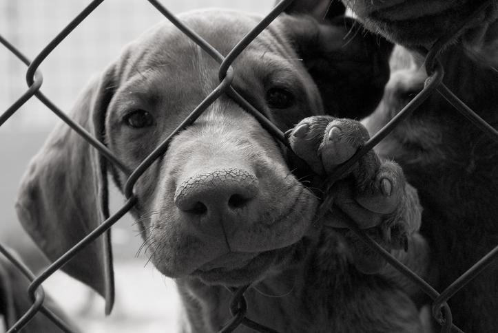 Därför bör du inte adoptera en utländsk gatuhund