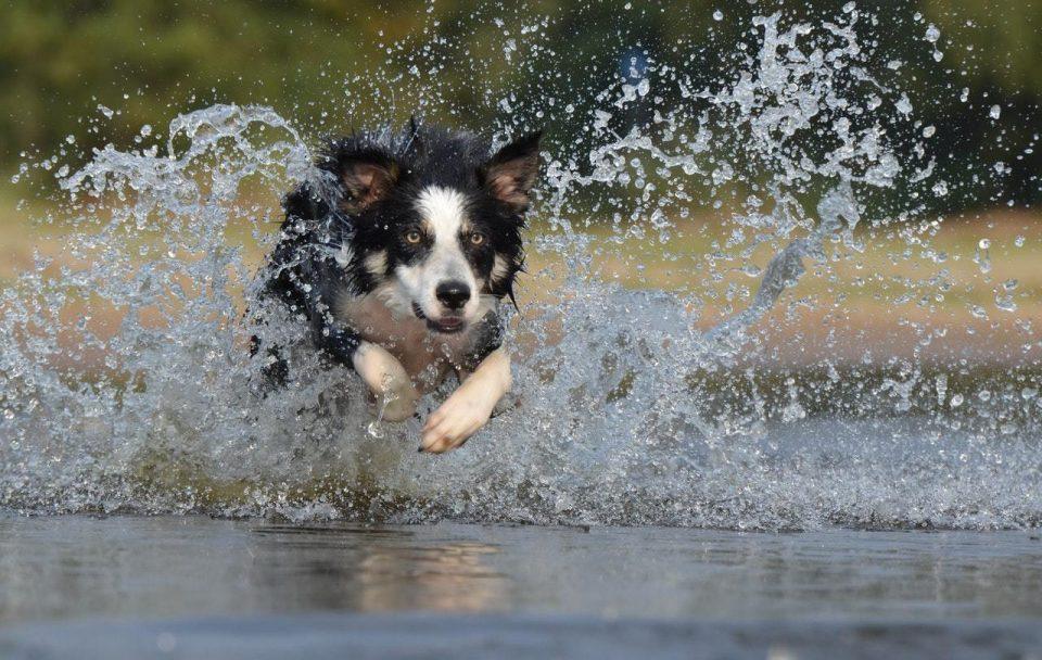 Bada med hunden
